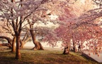 Tsunami and the cherry blossom: Psihološka analiza posledica nakon prirodne katastrofe